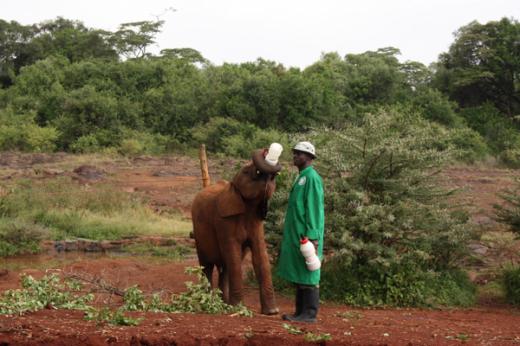 Elefant # 1