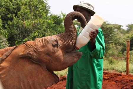 Elefant # 2