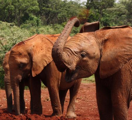 Elefant # 3